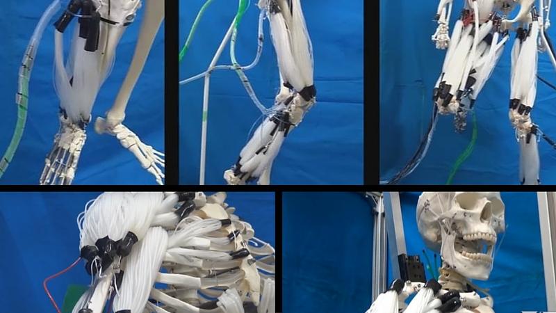 Imagens de Suzumori Endo Robotics do Instituto de Tecnologia de Tóquio